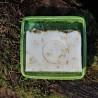 Mýdlenka zelená