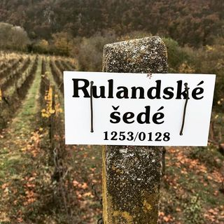 Vinice Šobes. Vinice v Národním parku Podyjí je jednou z nejstarších ve střední Evropě 😊 #jiznimorava#dovolena#vinice#sobes#narodniparkpodyji#vsudevino#zastrizlivatoasinepujde#cyklovylet